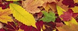 hd-gekleurde-herfstbladeren-wallpaper-hd-herfst-achtergrond-foto